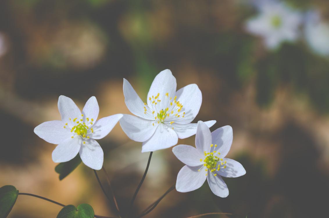 Flower Wish Greeting Note Cards Desktop Wallpaper Morning Free