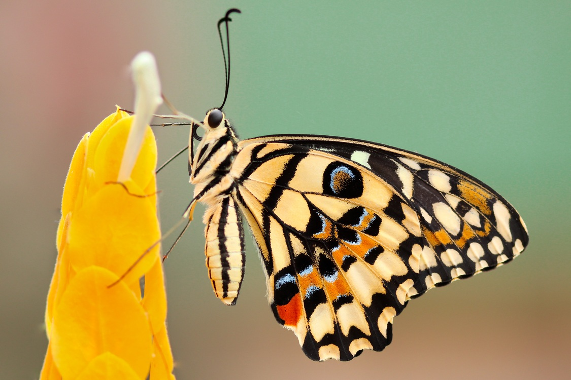 Butterfly,Moth,Macro Photography