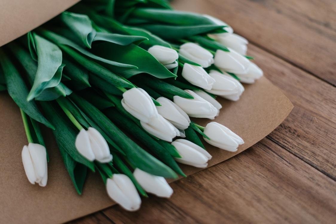 Petal,Flower,Tulip