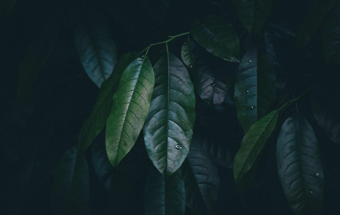 Organism,Plant,Computer Wallpaper