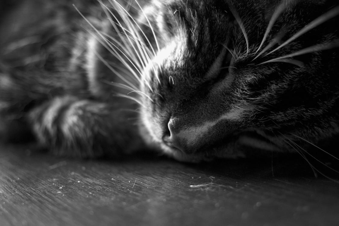 Monochrome Photography,Carnivoran,Black Cat