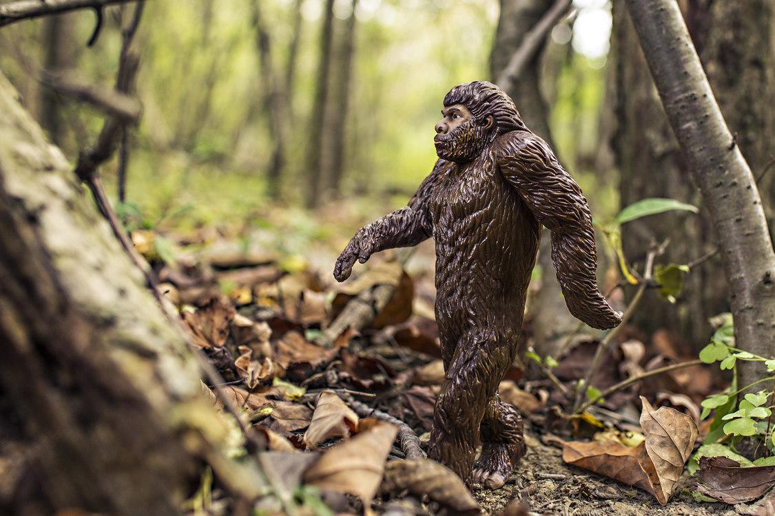 Wildlife,Primate,Tree