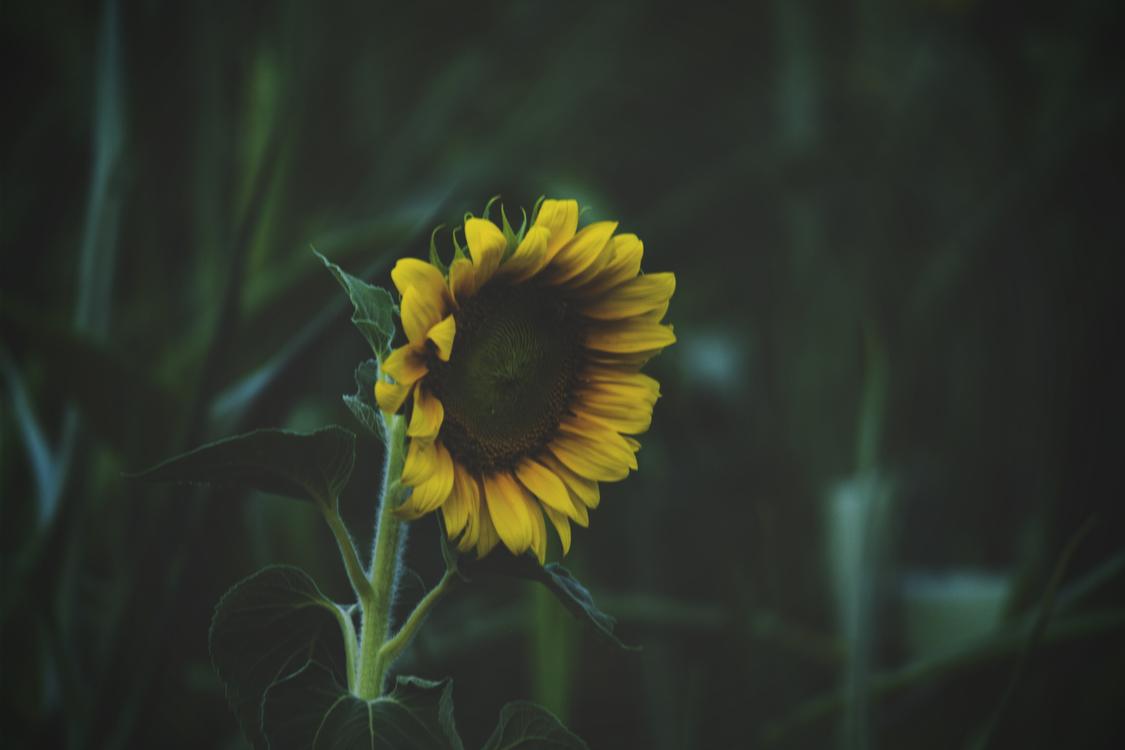 Flower Desktop Wallpaper Petal Light Natural environment