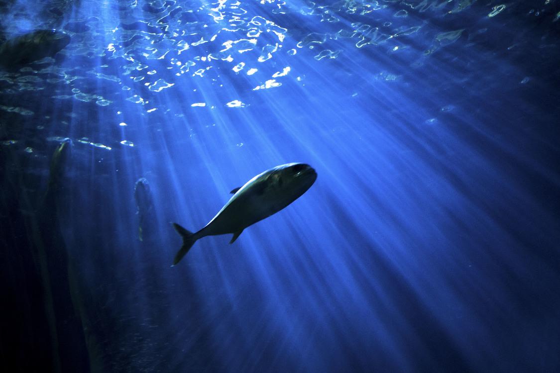 Blue,Marine Biology,Underwater