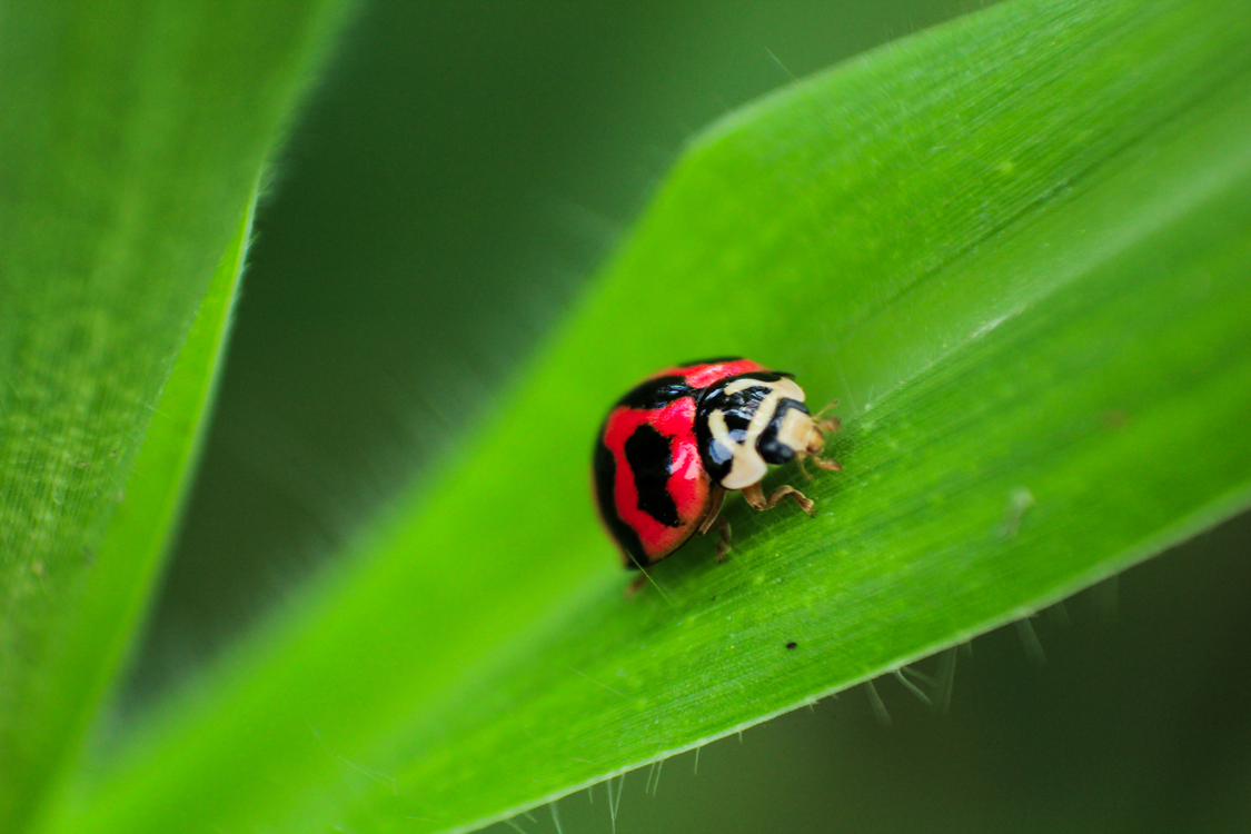 Close Up,Leaf,Ladybird
