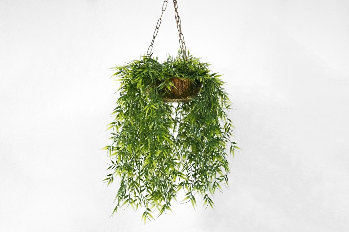 Plant,Twig,Leaf
