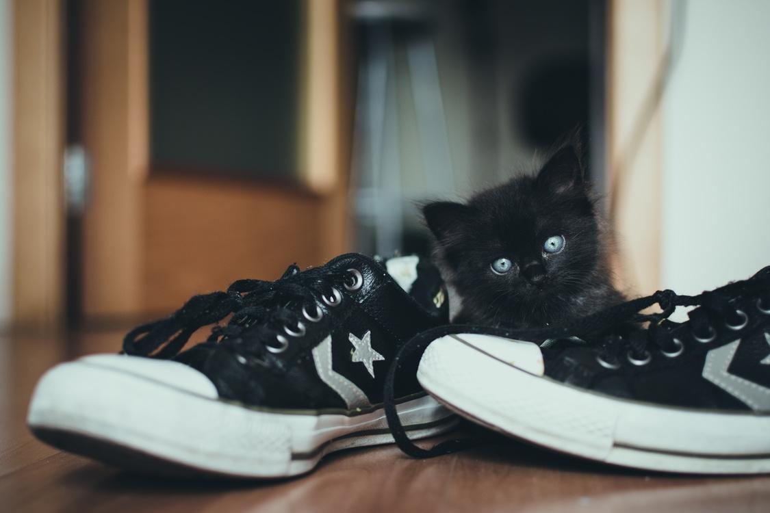 Small To Medium Sized Cats,Kitten,Vertebrate