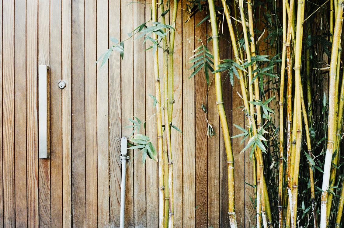 Bamboo,Wood,Grass