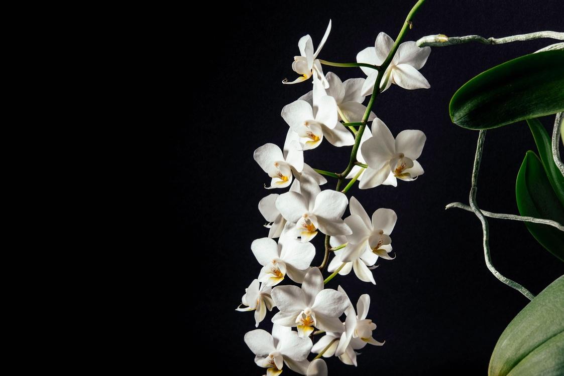 Plant,Flora,Branch
