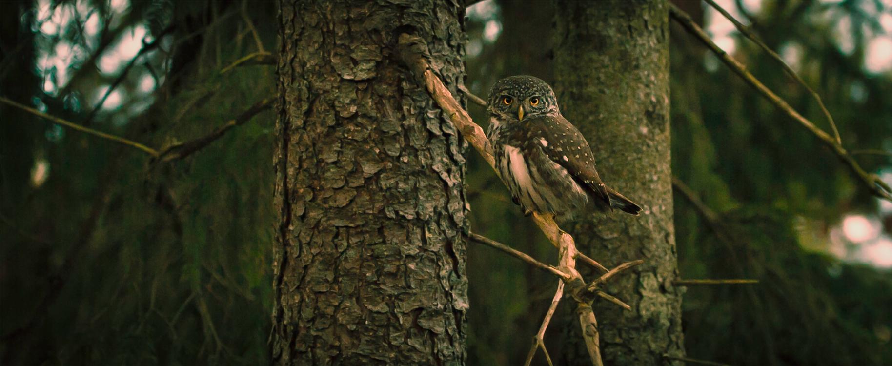Biome,Wildlife,Ecosystem