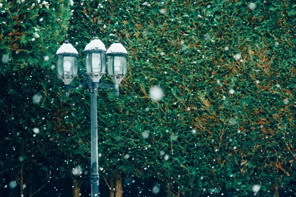 Biome,Street Light,Light