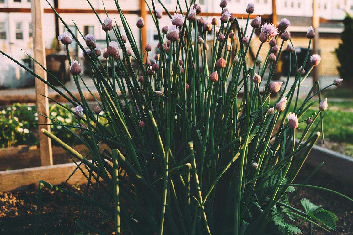 Plant,Flora,Herb