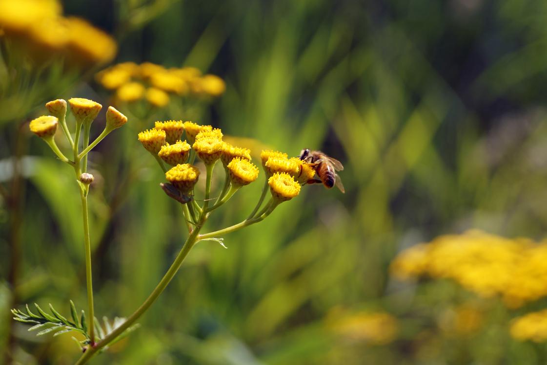 Plant,Flora,Nectar