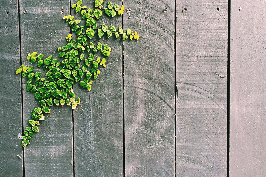 Fence Woody plant Tree