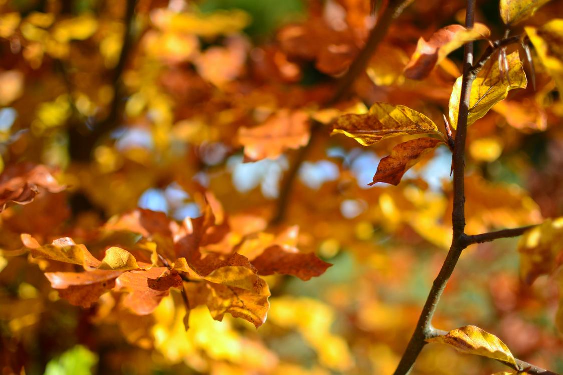 Leaf,Spring,Tree