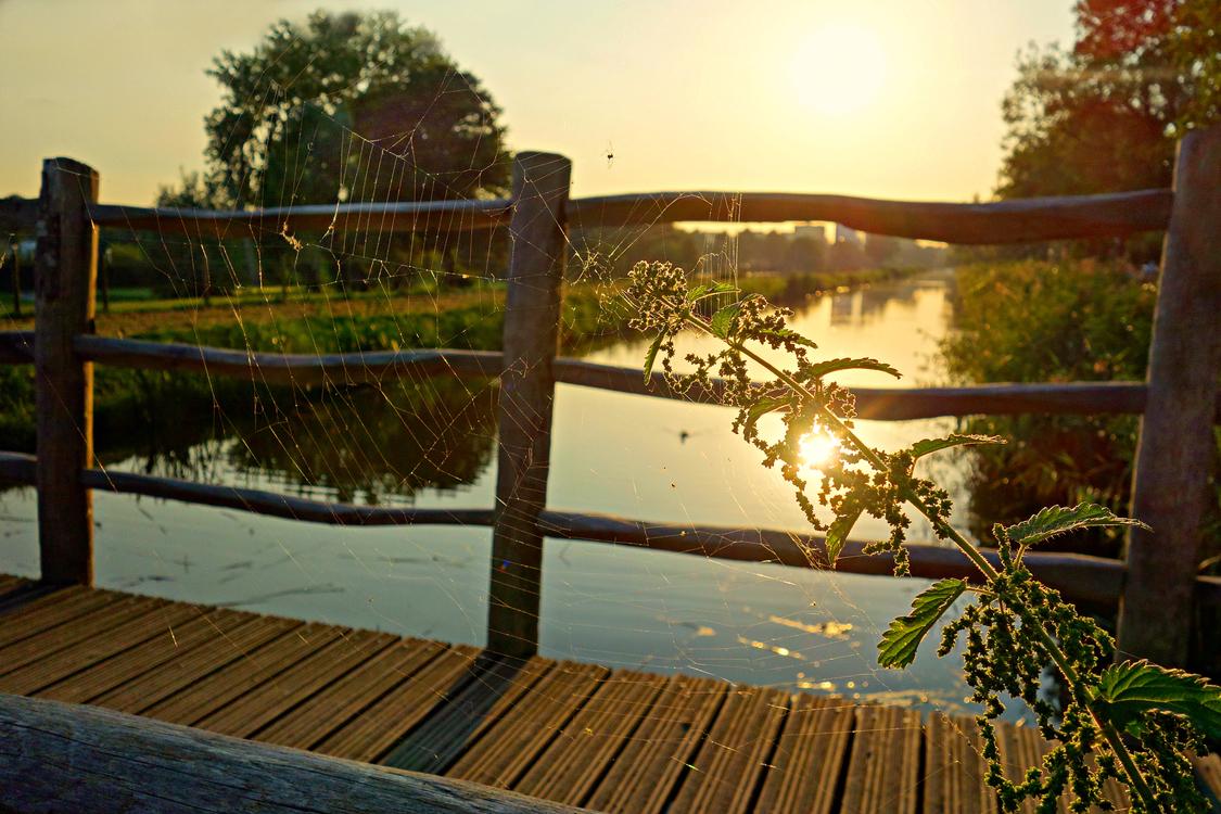 Evening,Reflection,Fence