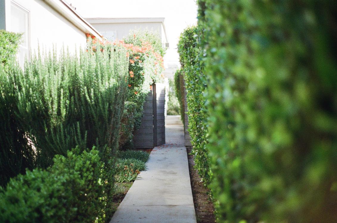 Plantation,Plant,Yard