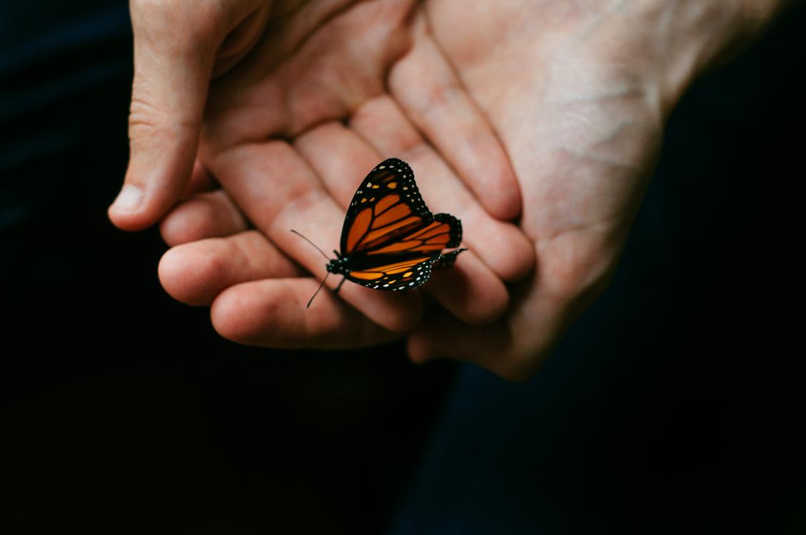 Butterfly,Arthropod,Close Up