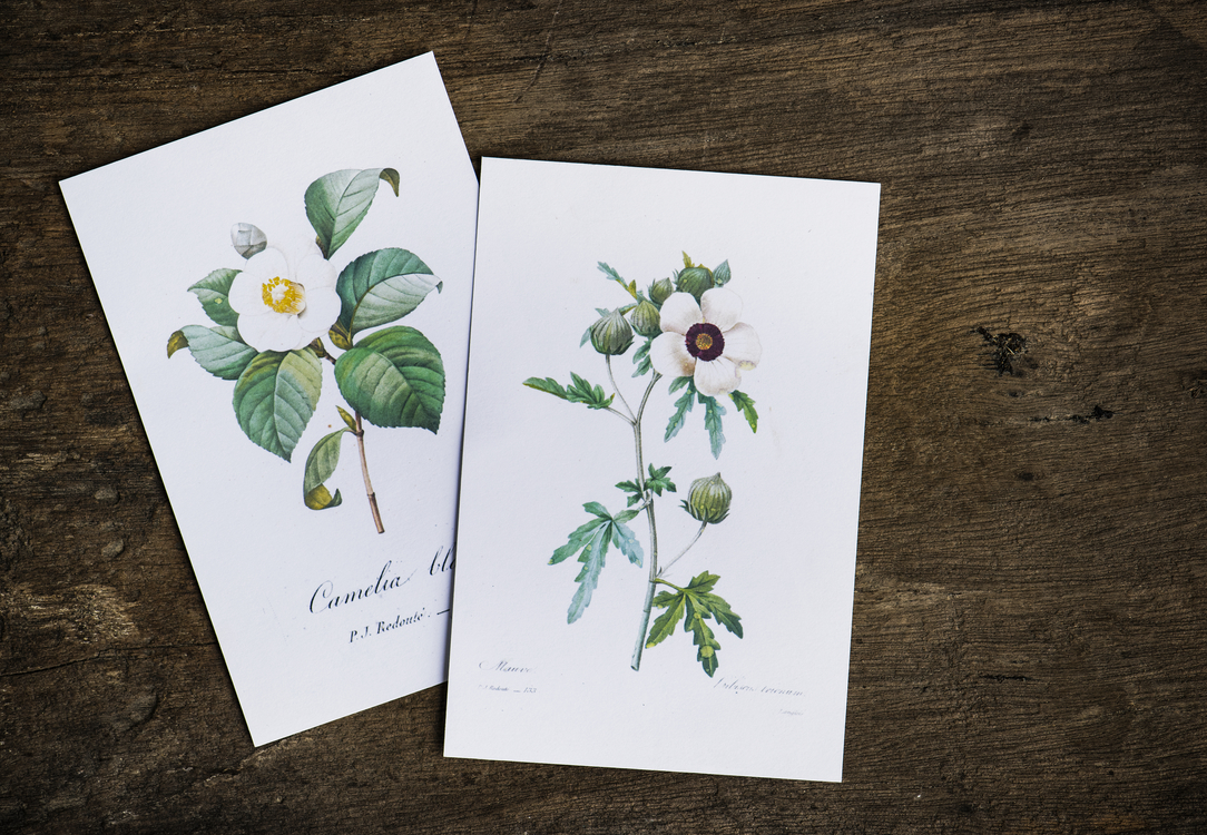 Greeting Card,Plant,Flora