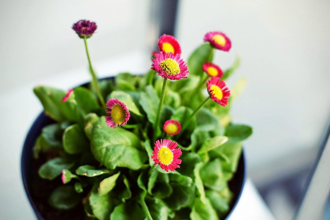Plant,Flower,Flowerpot