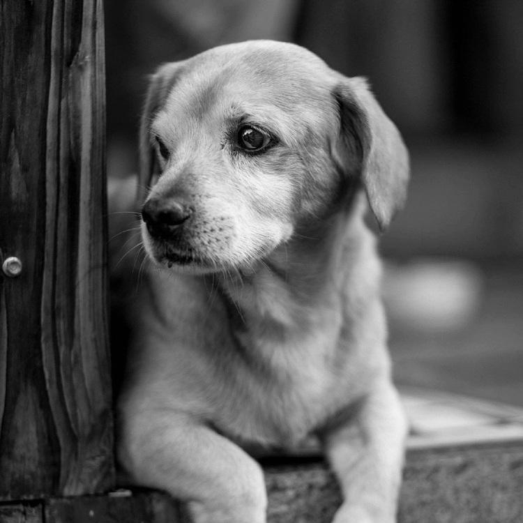 Street Dog,Companion Dog,Monochrome Photography