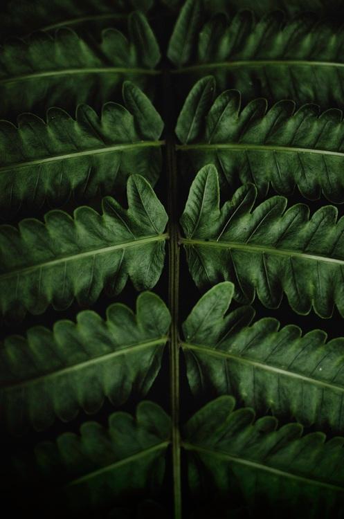Plant,Computer Wallpaper,Leaf