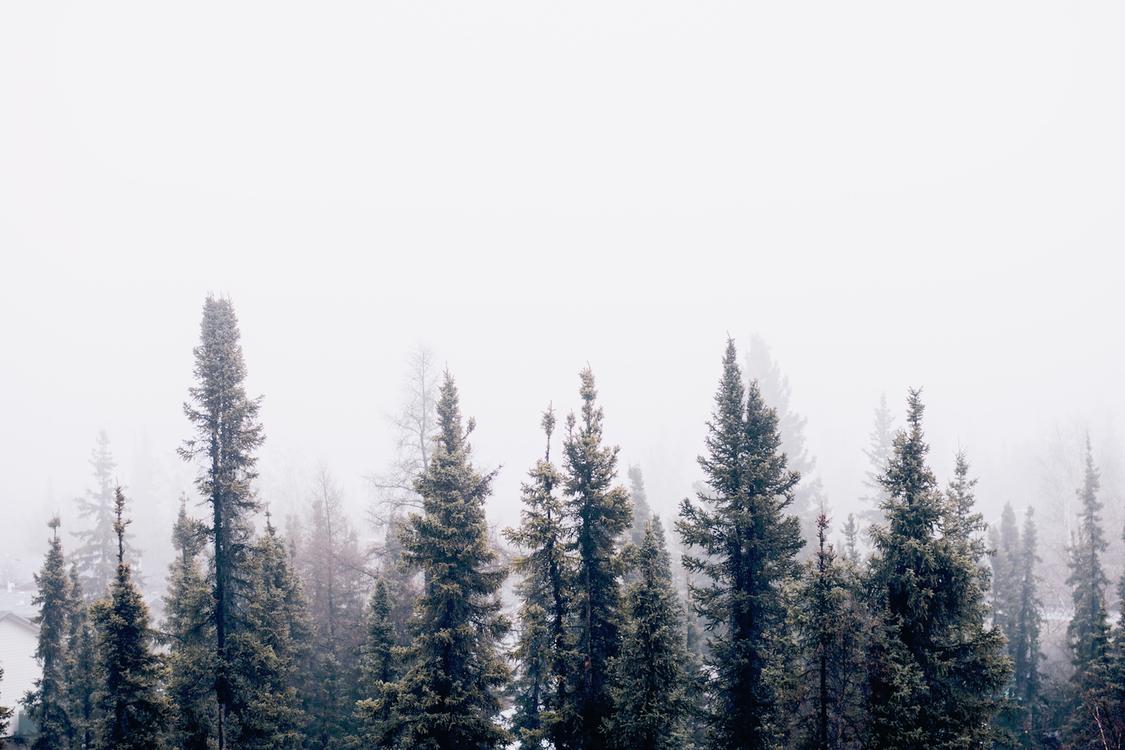 Mountain,Spruce Fir Forest,Conifer