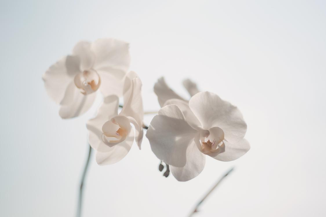 Flower,Blossom,Petal