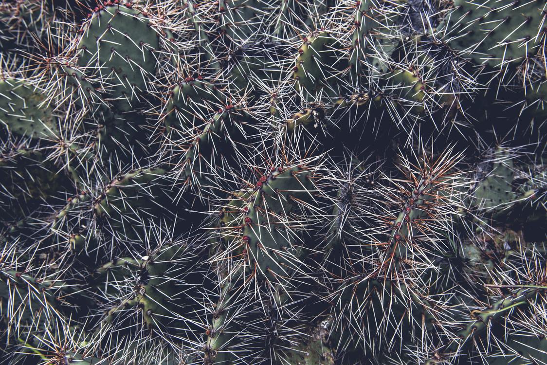 Fir,Biome,Plant