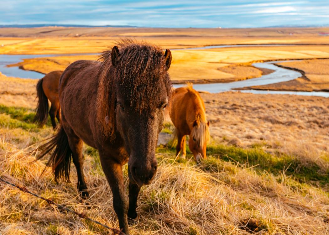 Wilderness,Prairie,Pasture