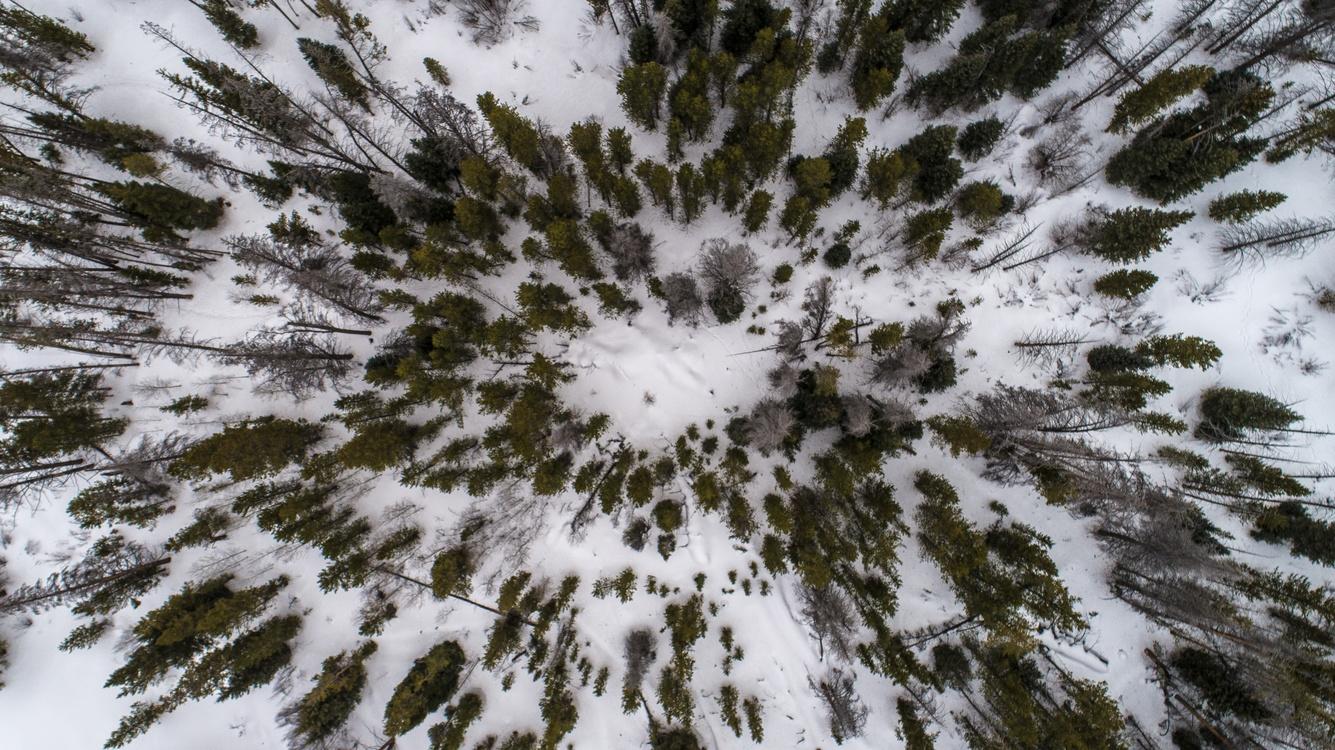 Winter,Tree,Freezing