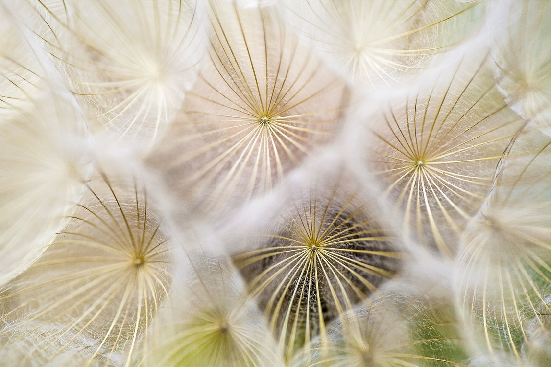 Pollen,Stock Photography,Flora