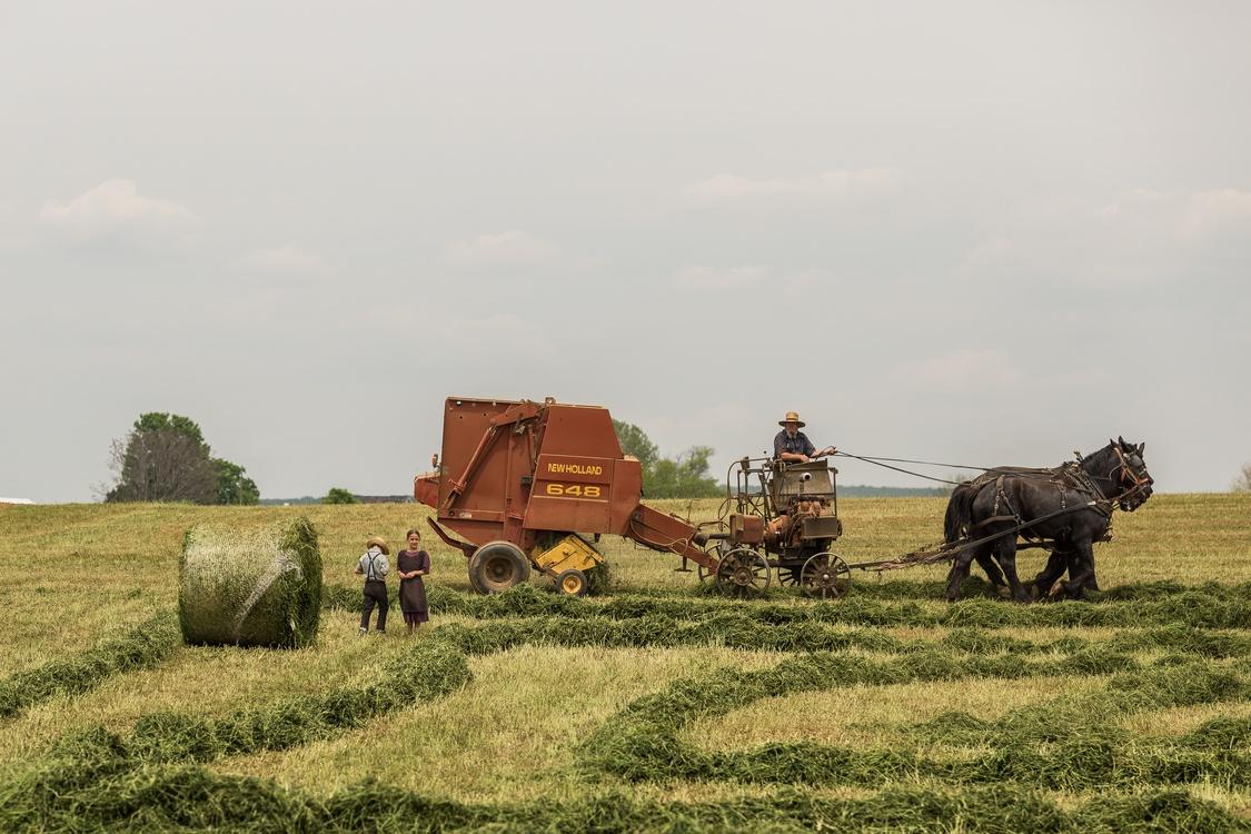 Plant,Hay,Farm