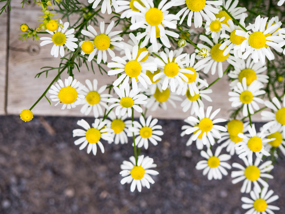 Petal,Plant,Flora