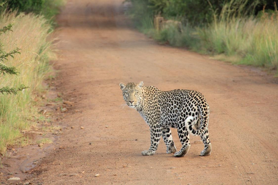 Kruger National Park Marloth Park Queen Elizabeth National Park Etosha National Park