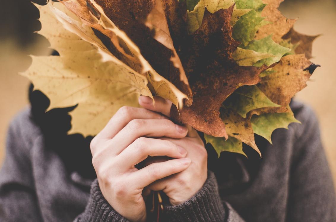 Autumn,Tree,Leaf