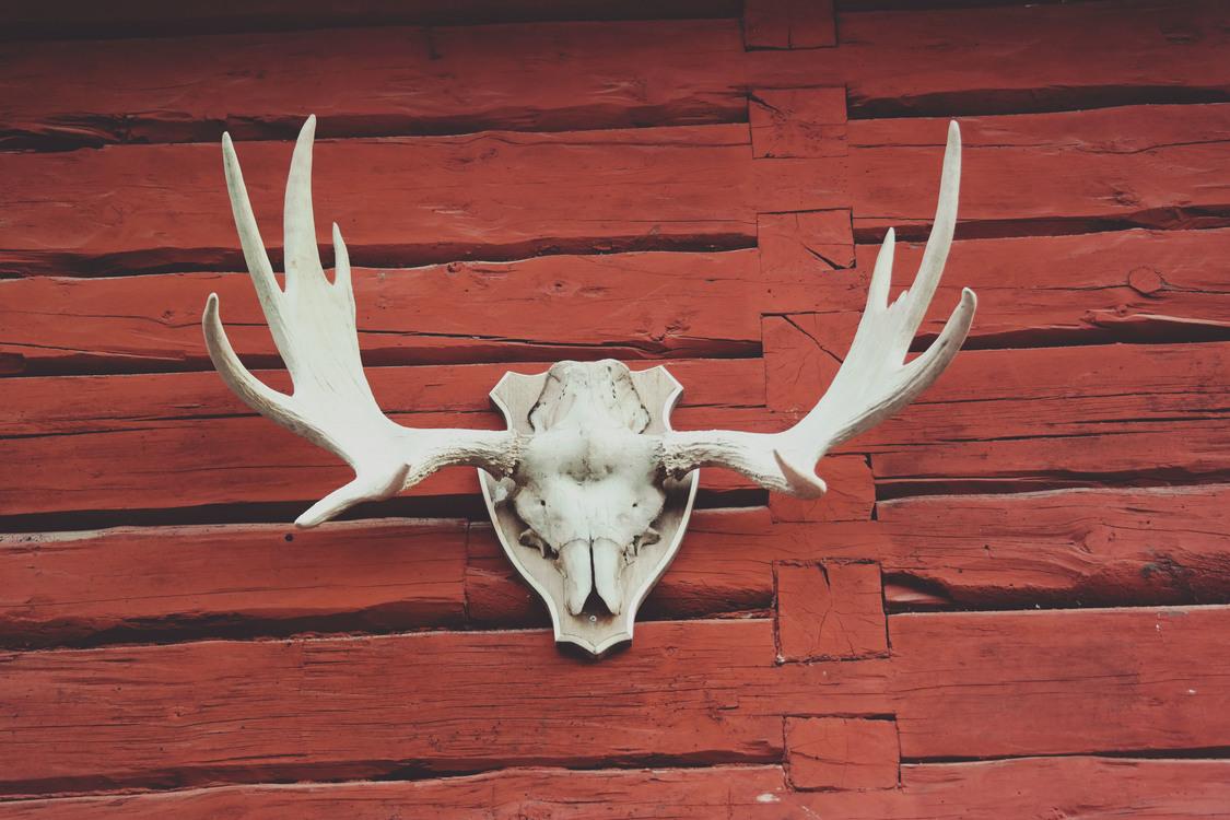Wildlife,Deer,Horn