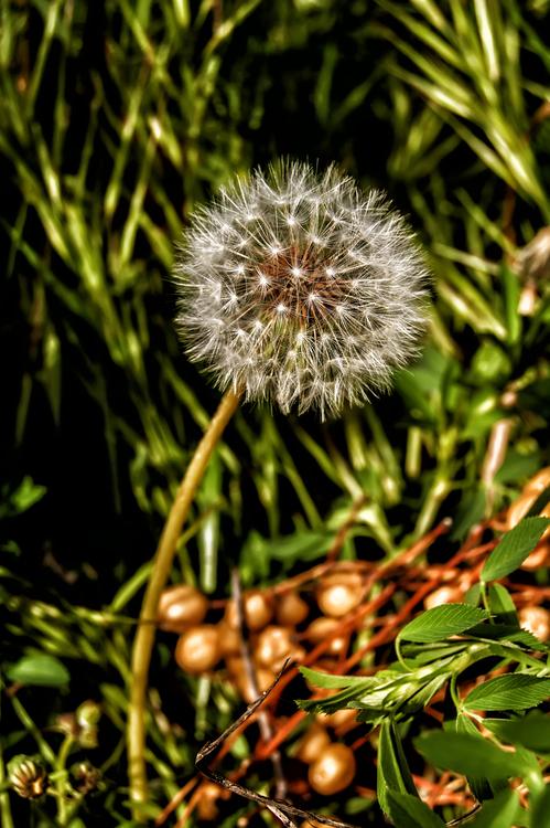 Plant,Flora,Grass