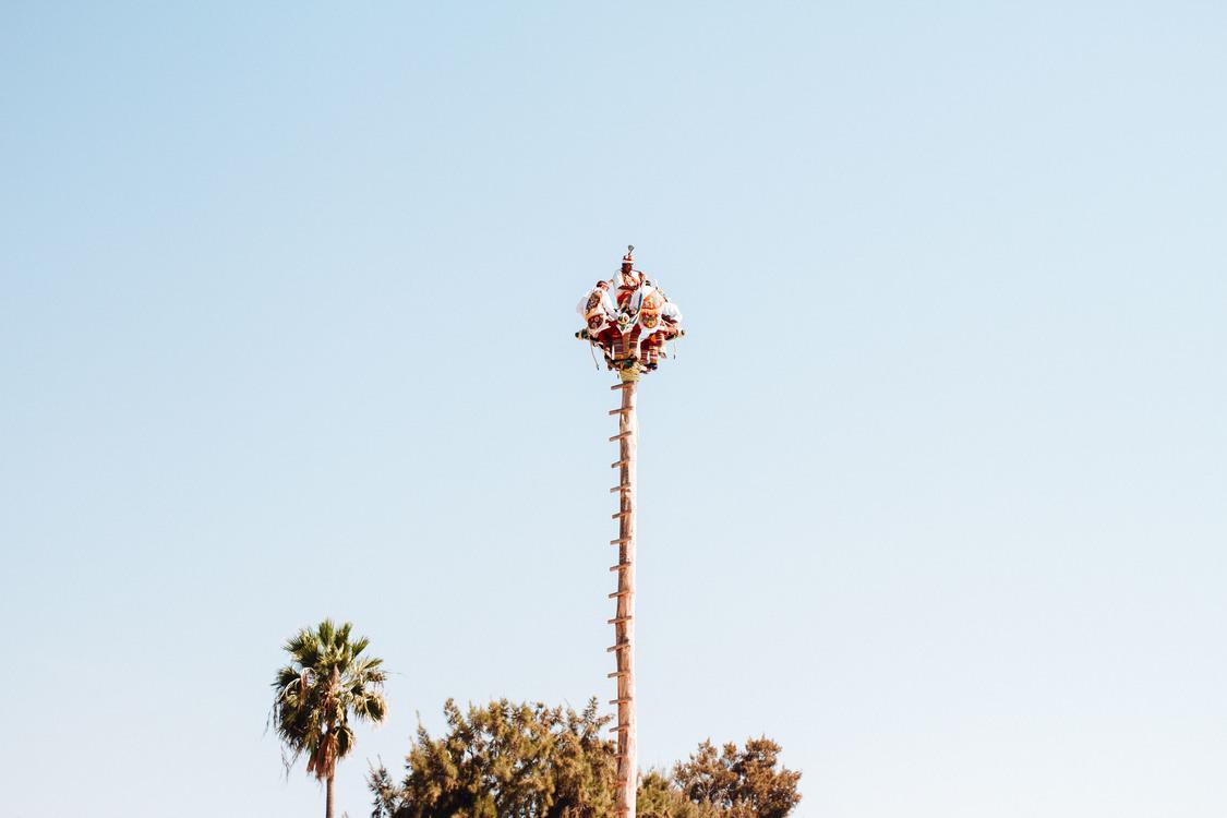 Tree,Pole,Sky