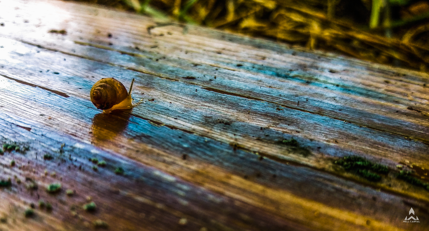 Close Up,Leaf,Snail