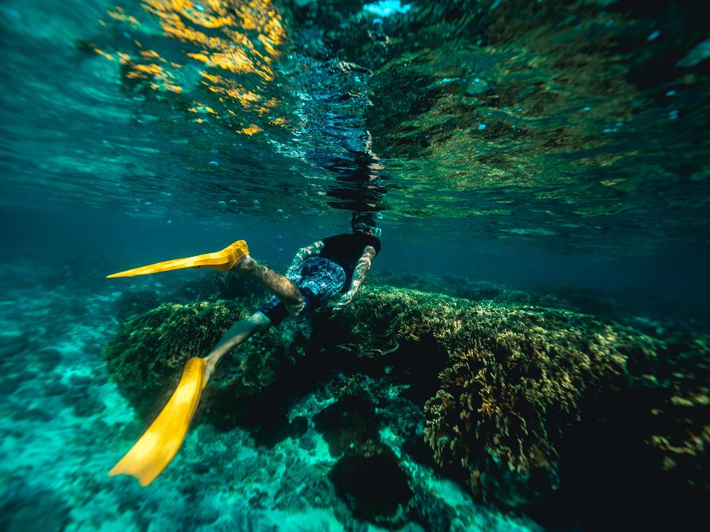 Underwater,Reef,Marine Biology