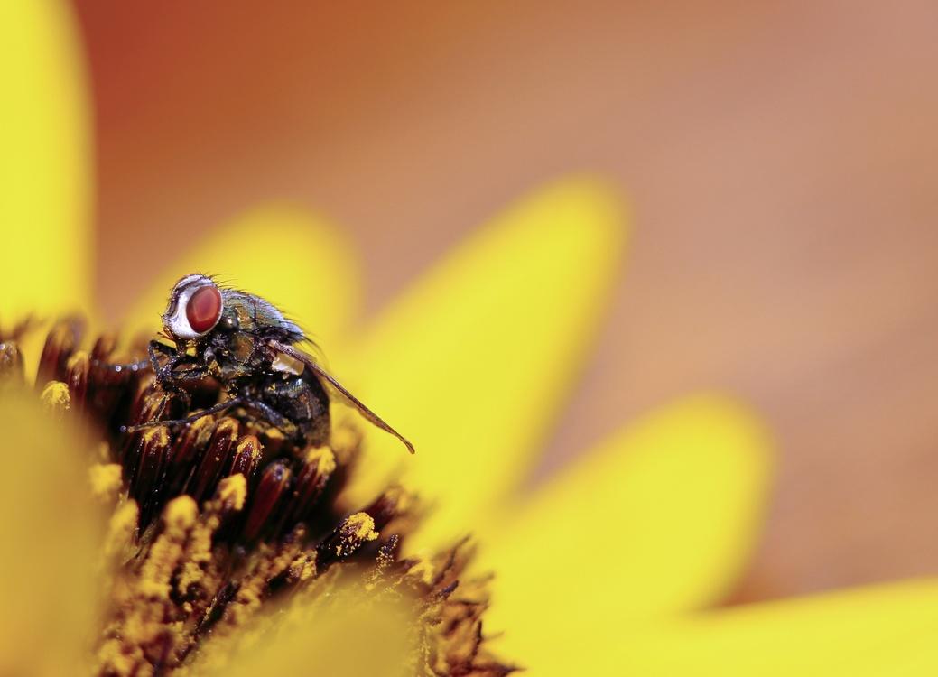 Pollen,Pollinator,Close Up