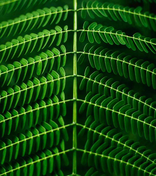 Leaf,Symmetry,Mesh