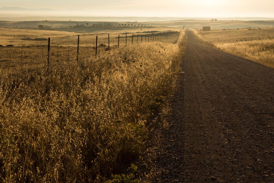 Meadow,Soil,Crop