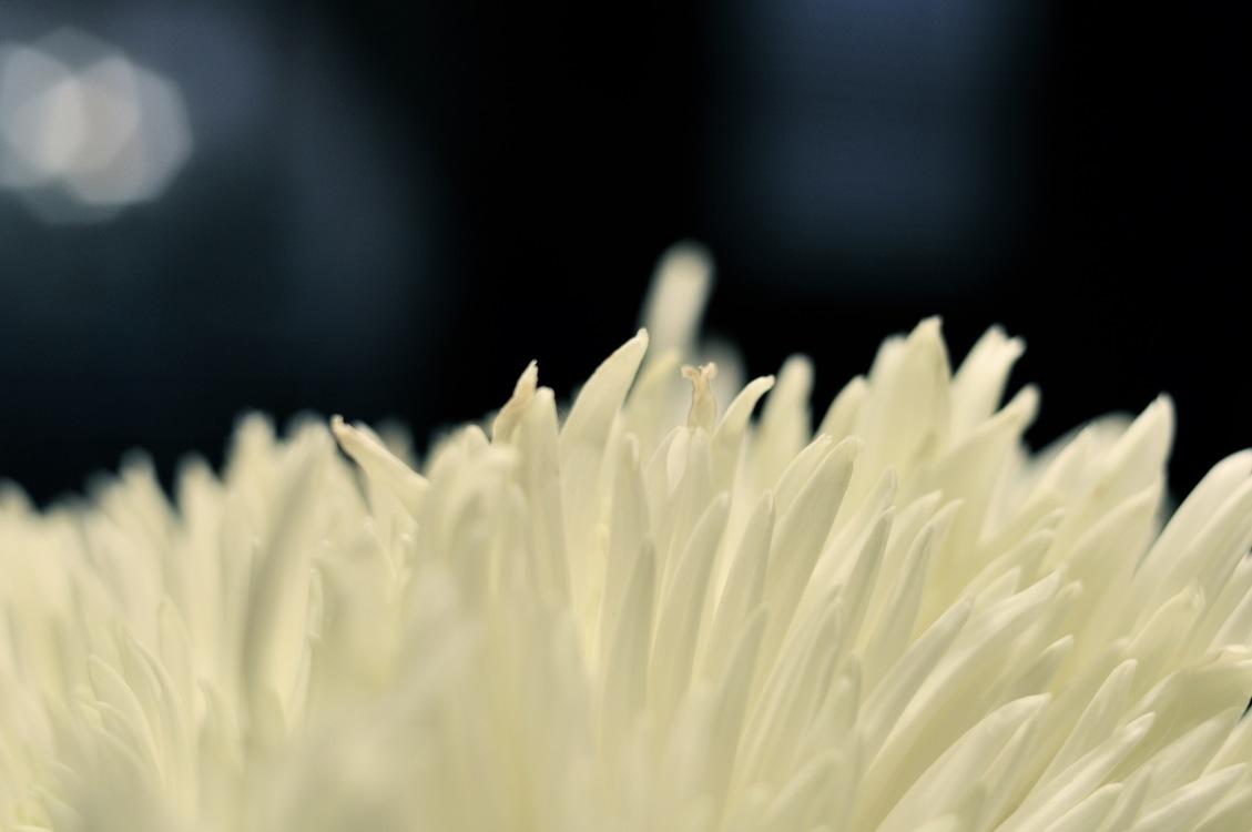 Pollen,Plant,Close Up