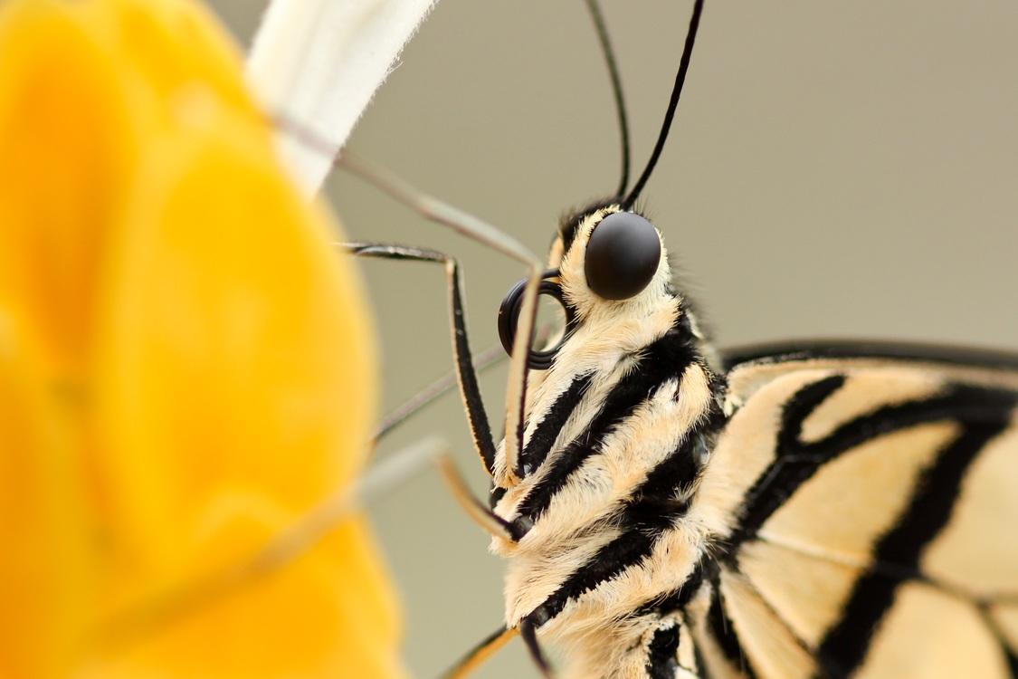 Butterfly,Wildlife,Moth