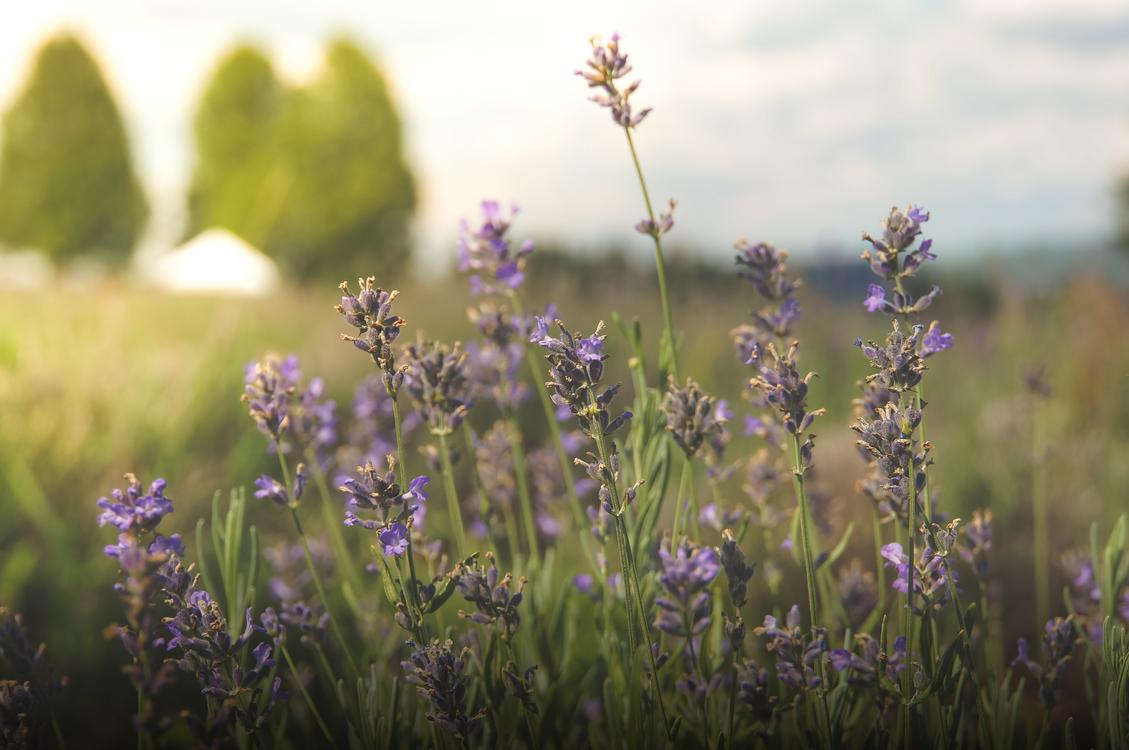 Meadow,Plant,Flora