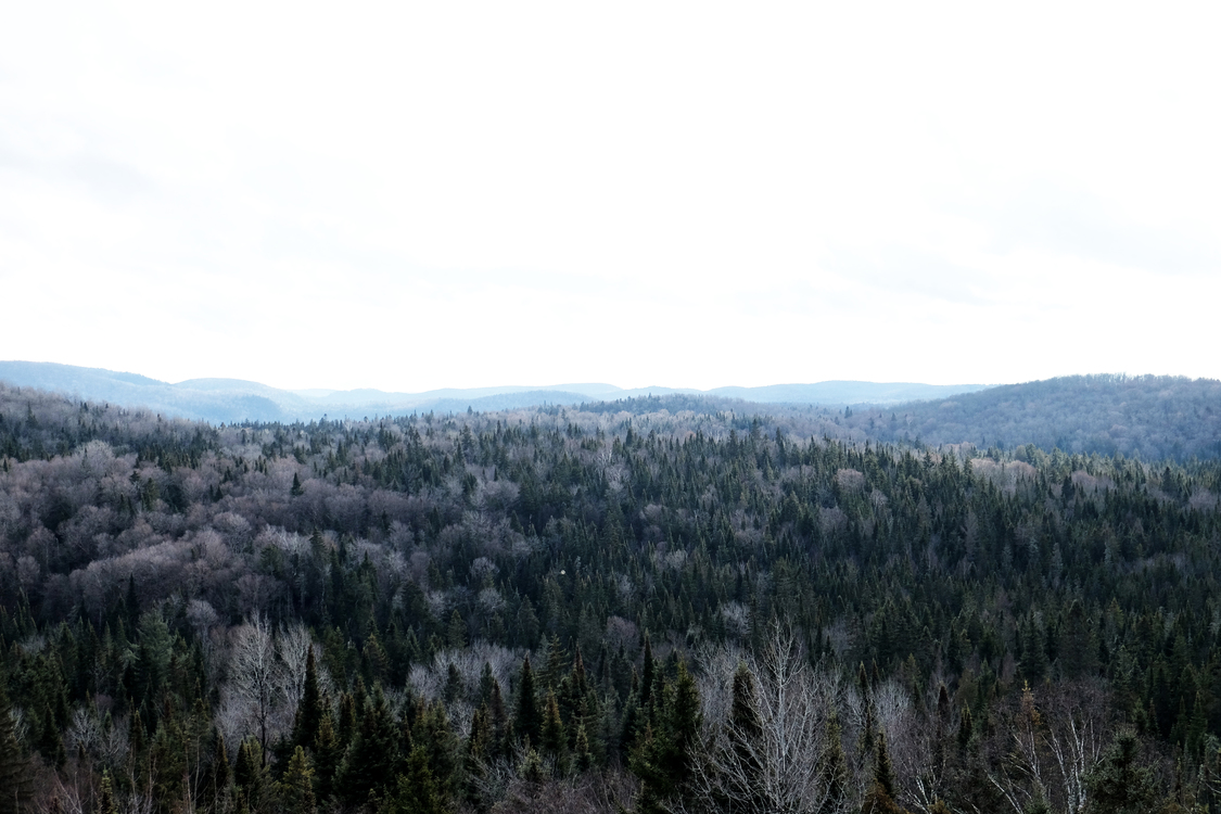 Wilderness,Conifer,Spruce Fir Forest