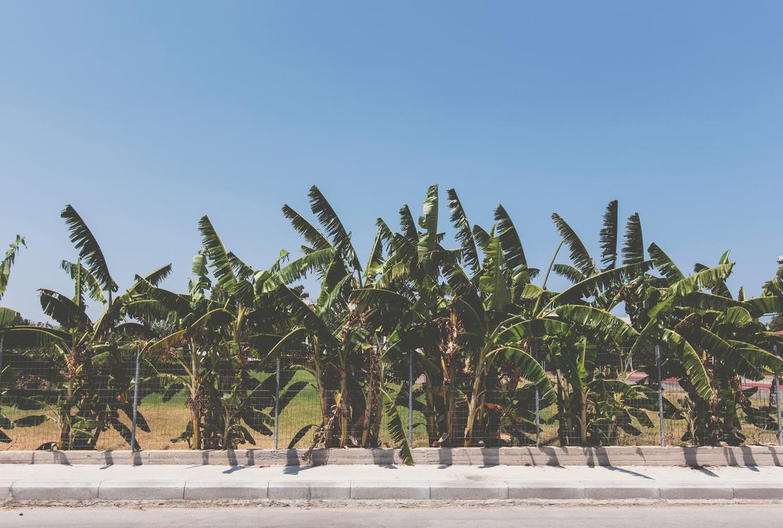 Plant,Tropics,Arecales
