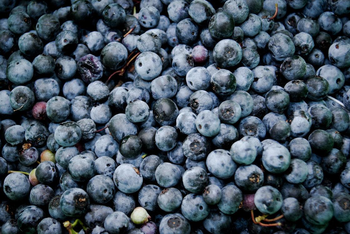 Plant,Huckleberry,Bilberry